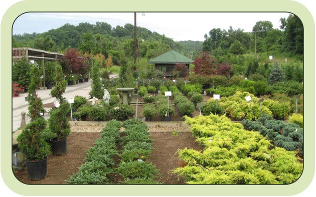 Nursery Garden Center Northwest Arkansas